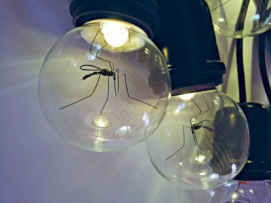 La zanzara dell'artista Daeyoung Kang