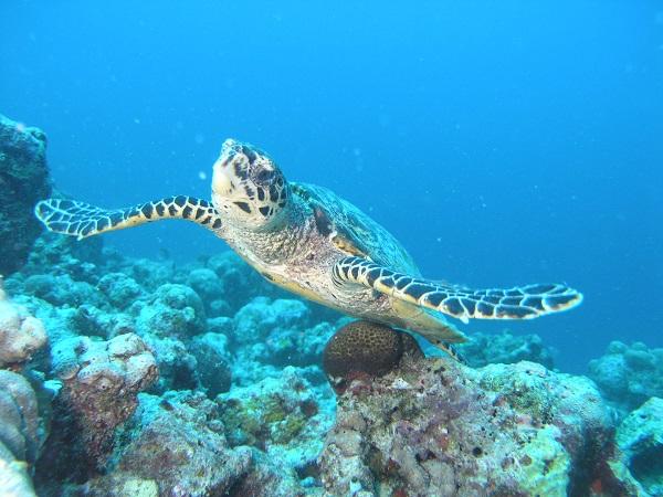 Maldive_1