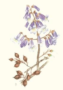 Pittura-Botanica