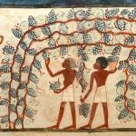 3 - Tomba di Nakht, 2° millennio a. C.-vendemmia