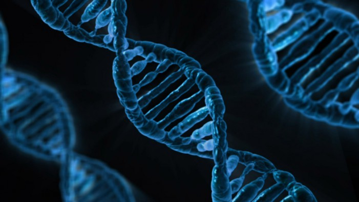 DNA – Il lungo percorso da Mendel alla pecora Dolly