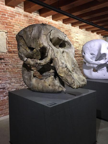 10 Skull of a Cyclops, Marmo di Carrara, Punta della Dogana