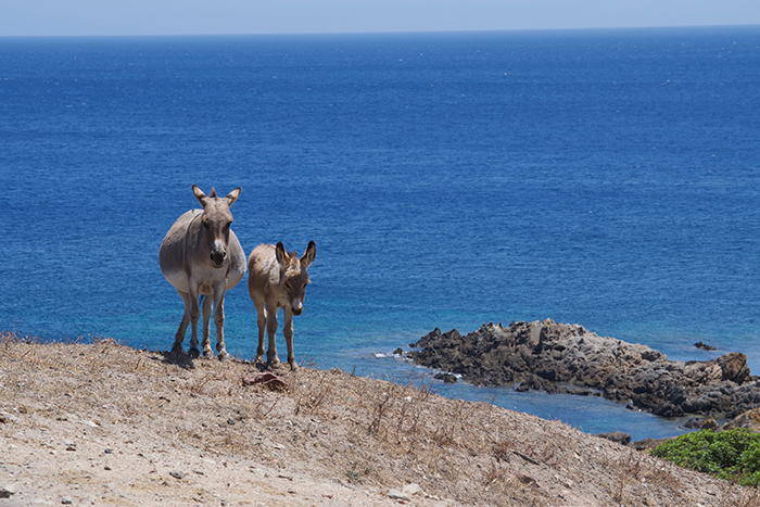 Sardegna tutto l'anno. Nel silenzio incantato dell'Asinara
