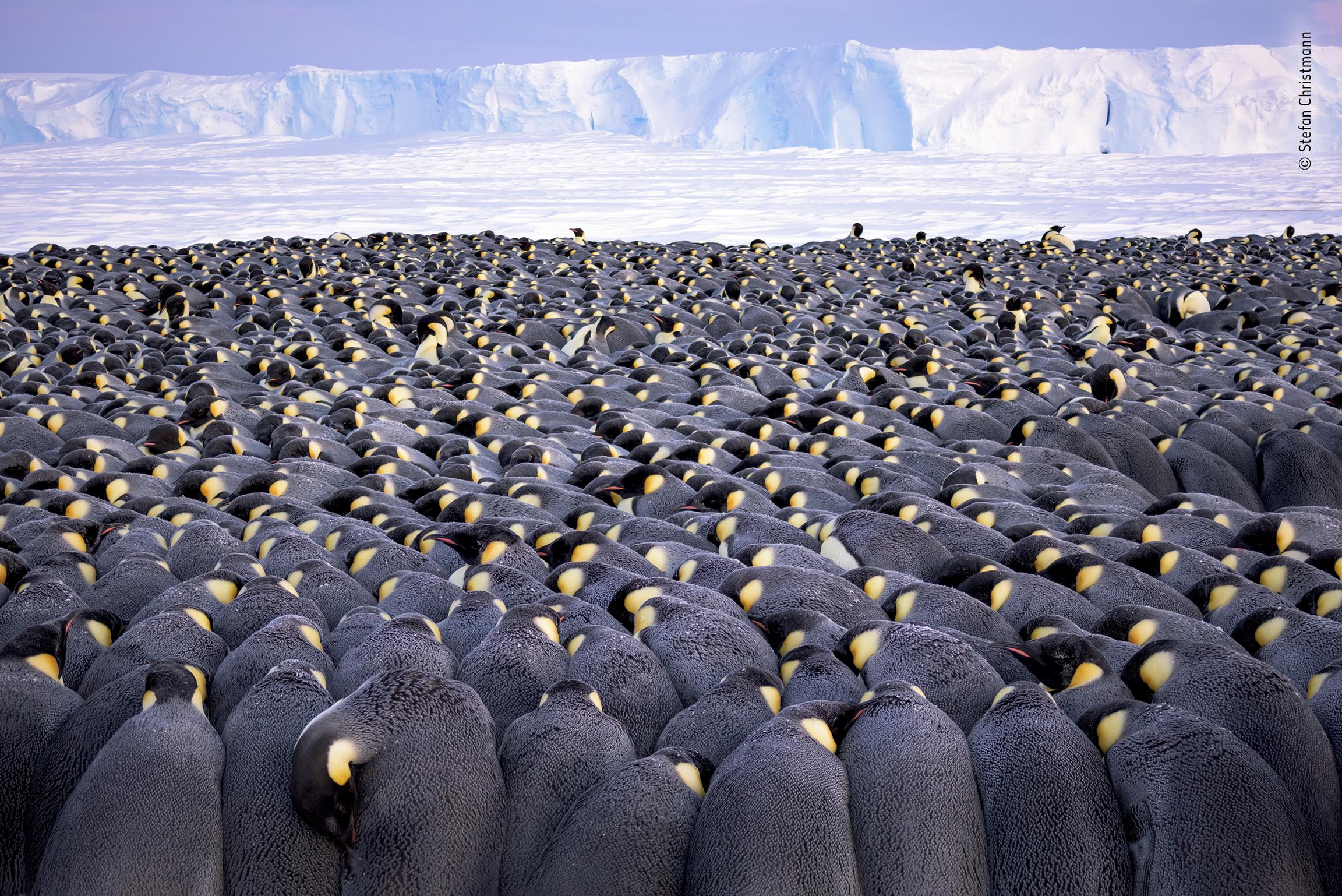 The huddle by Stefan Christmann, Germany Winner 2019, Wildlife Photographer of the Year Portfolio Award