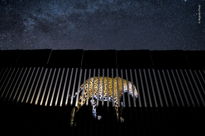 Another barred migrant by Alejandro Prieto, Mexico, Winner 2019, Wildlife Photojournalism: Single Image