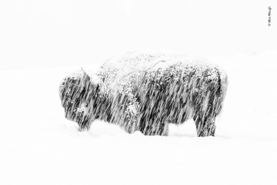 Snow exposure by Max Waugh, USA Winner 2019, Black and White
