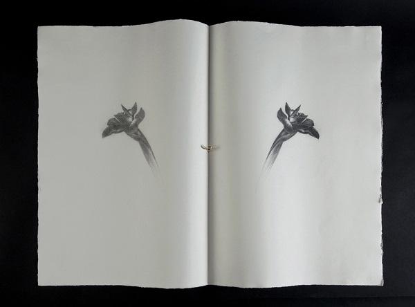 Omar Galliani Un iris per Giorgio matita nera su carta e anello d'oro 78.5x107 cm