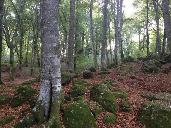 Suggestivi panorami nel verde dei Monti Cimini