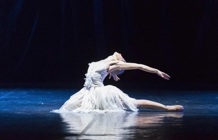 Il Lago dei Cigni ovvero il canto al Teatro Duse