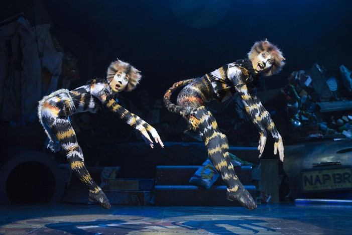 Cats. Let the memory live again – Il Musical