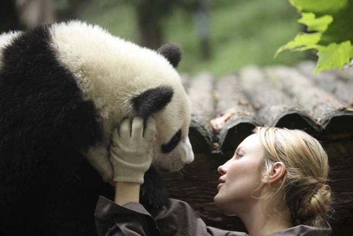 Da YouTube al Cinema, ecco Sneezing Baby Panda