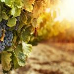 Etna Eatinerante, la serata sui Vini dell'Etna