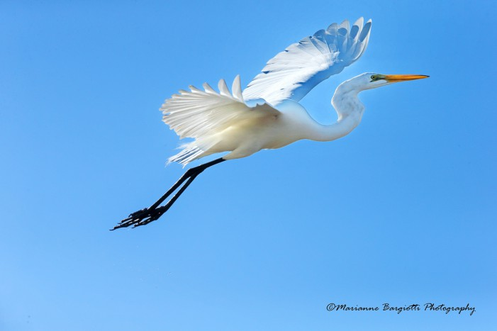Mare, sabbia, keys e wildlife. A tutta Florida!