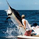E' iniziata la vivace stagione della pesca di oceano!