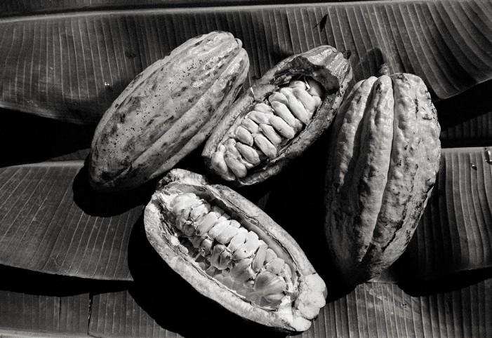 Cacao, il Brasile di Jorge Amado immortalato da Luca Rinaldini