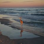 In viaggio a Pensacola, tra sapori e profumi della cucina di mare più vera e originale che possiate desiderare.