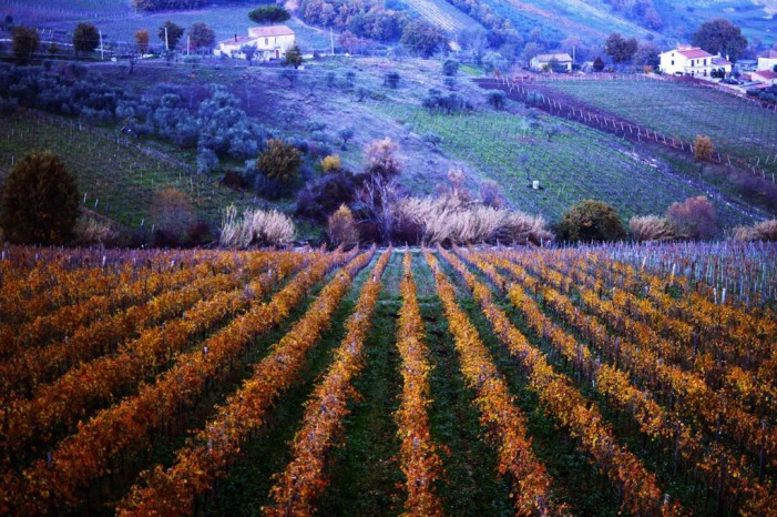 Città Europea del Vino 2019 è Guardia Sanframondi del territorio Sannio Falanghina