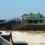 Off the beaten roads: Florida Panhandle, un tour ideale fuori dai soliti itinerari