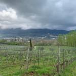 Cantine Aperte 2019, quali sono gli appuntamenti nel Lazio