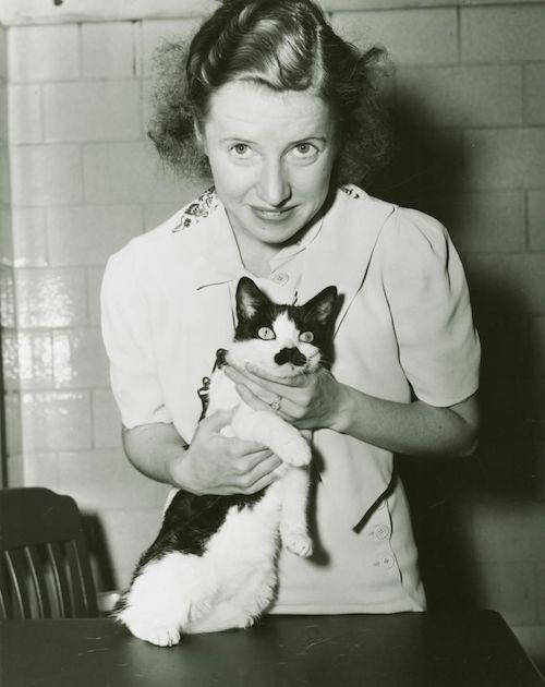 I Gatti e i personaggi famosi
