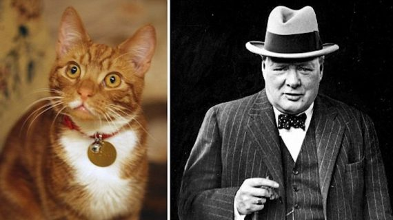 Mondo Gatto: i gatti e i personaggi famosi