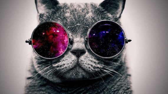 Mondo gatto.Il gatto tra il tempo e lo spazio