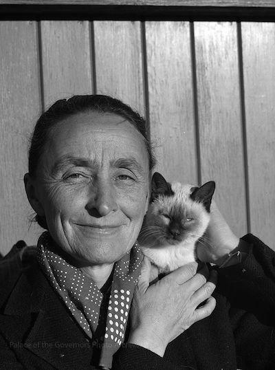 I gatti e la fotografia