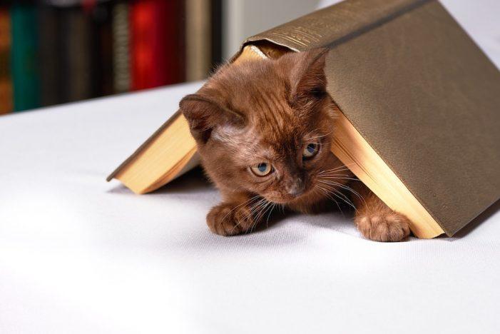 Mondo gatto. La letteratura dei gatti o i gatti nella letteratura?