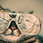 i gatti e la letteratura