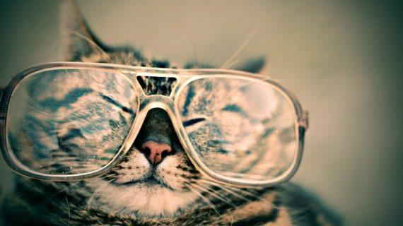 Mondo Gatto: i gatti e la letteratura, seconda puntata