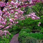 Benvenuti all'Orto Botanico di Roma ed al suo roseto