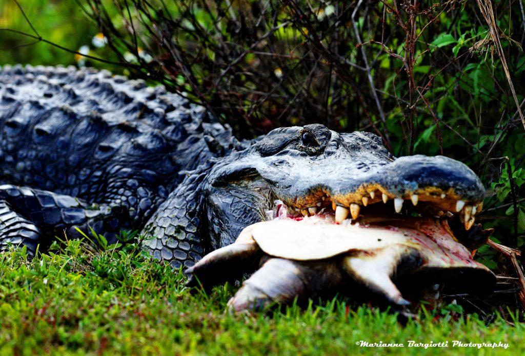 giugno lentezza tartarughe mywhere