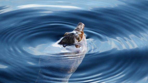 Giugno, la lentezza e le tartarughe