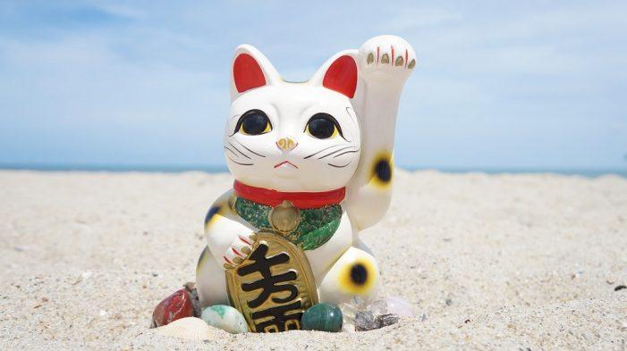 Mondo Gatto: dall'Oriente il gatto splendente