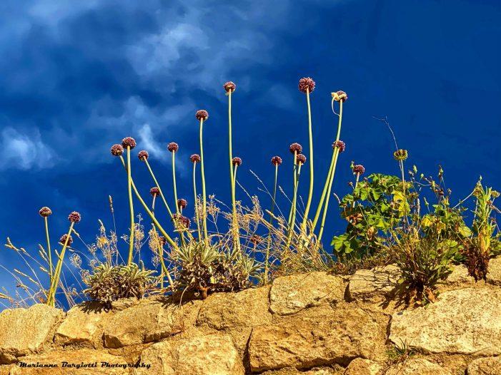 Viaggio alle Isole Tremiti: un paradiso possibile anche a settembre
