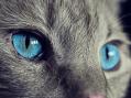 Mondo Gatto: 7 cose da sapere sui gatti che potrebbero stupirvi