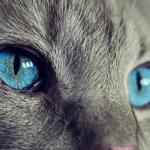 cose da sapere sui gatti