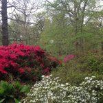 giardino consigli utili foto MyWhere