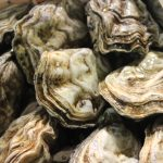 Il pesce consigliato dallo Chef Fabio Campoli nelle festività natalizie per una scelta consapevole di gusto e benessere