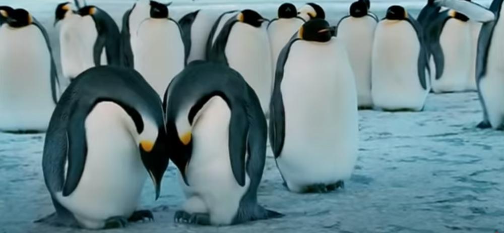 I migliori documentari di sempre pinguini