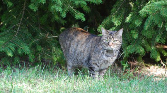 Pet Therapy: Trascorrere del tempo in relax con i nostri amati gatti fino ad indossarli