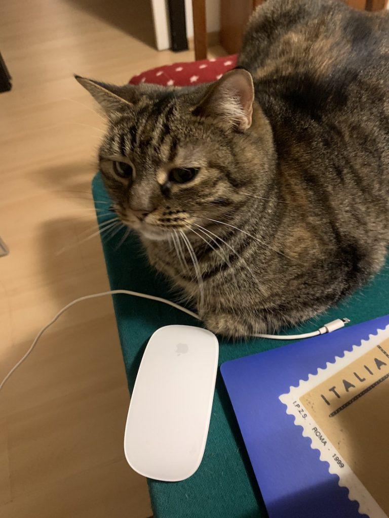 gatti sulla tastiera Foto MyWhere