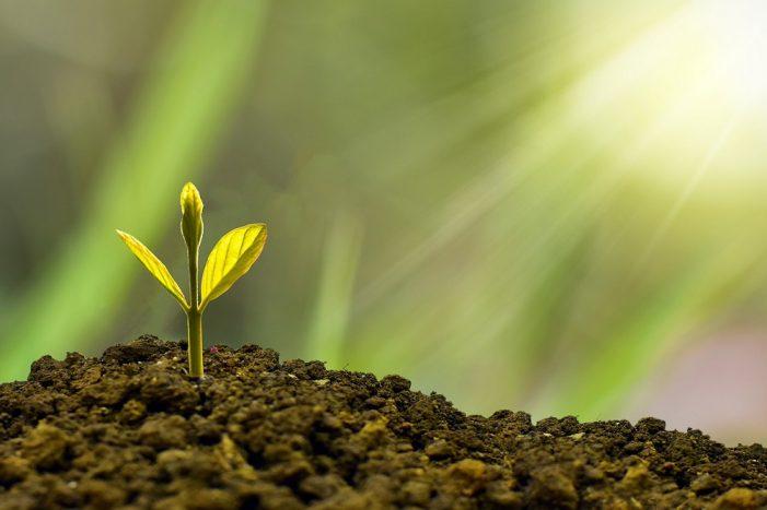 Seminare speranza attraverso cultura e Green Economy