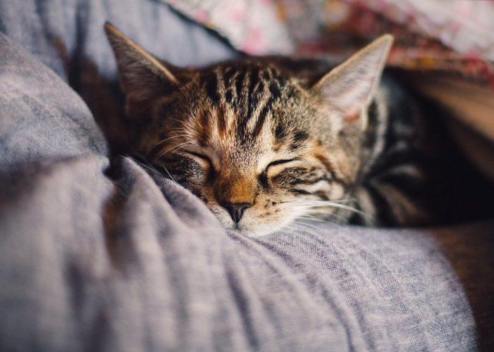 Librerie, regno dei gatti! Il boom della letteratura felina