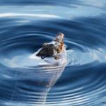 Giornata Mondiale dell'Acqua 2021: cos'è l'acqua per voi?