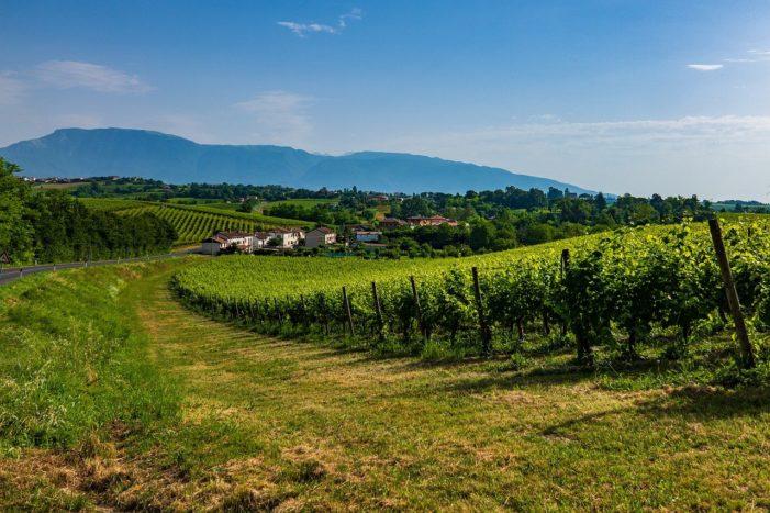 Il vino che cambia: dalle degustazioni allo storyliving, al via una nuova forma di turismo