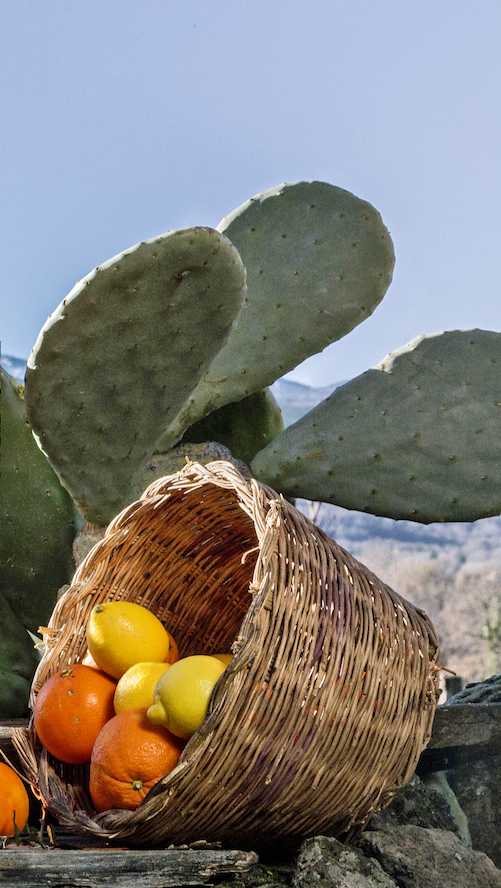charlotte di limone