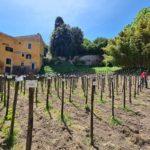 Ortidea 2021: biodiversità e grandi vini all'Orto Botanico di Roma