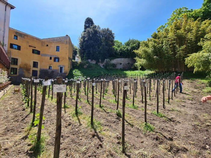Era di Maggio: perdersi nell'Orto Botanico di Roma tra i Migliori Vini Italiani