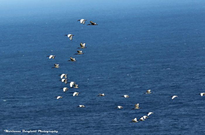 Giornata Mondiale degli Oceani: perché i mari vanno protetti entro il 2030